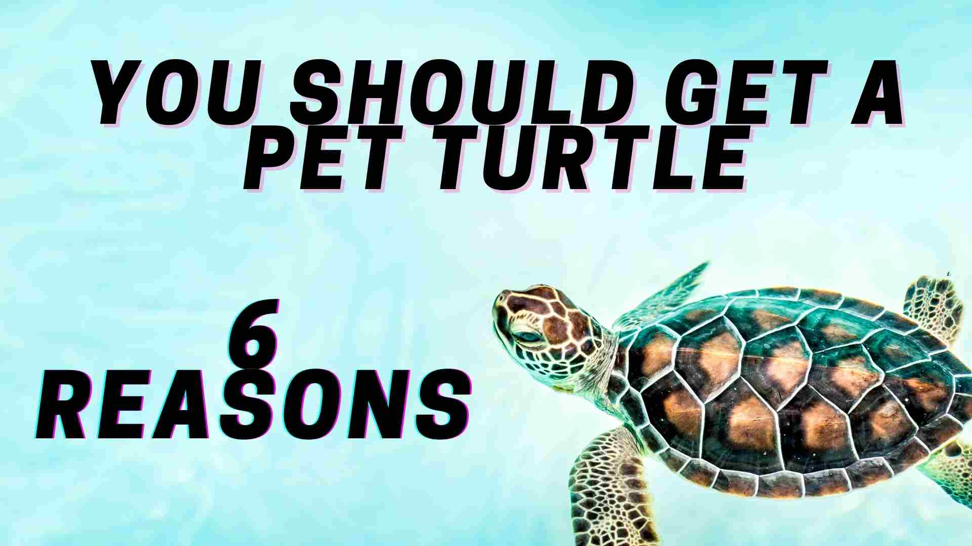 6 Reasons Why You Should Get a Pet Turtle (1)
