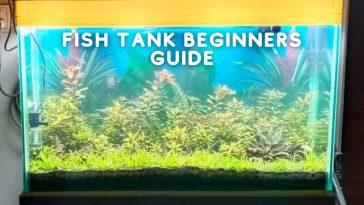 Fish Tank Beginners Guide