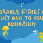 Adorable fishes you must add to your aquarium