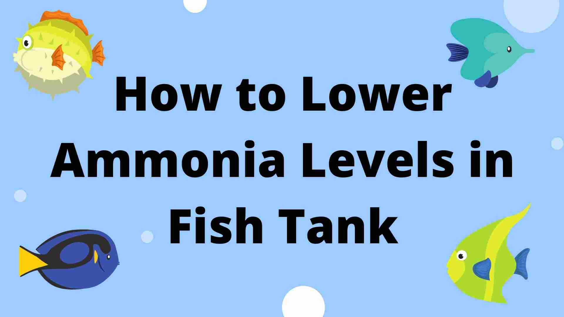 How to Lower Ammonia Levels in Fish Tank