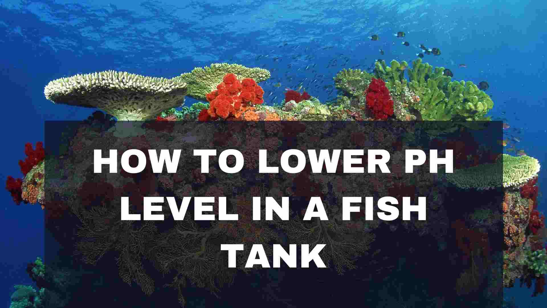 Steps for How to Lower pH Level in a Fish Tank